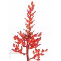 Bromeliad 'Aechmea fulgens 'red coral''