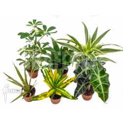 Araflora Easyplant Starter package