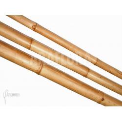 Bamboe trunck 2m (M)