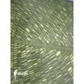 Calathea musaica 'L'