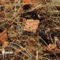 Cocos bark and husk ((potting media)