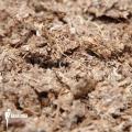 Dried spaghnum fine (0,5 kg) (potting media)