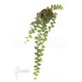Ficus pumila var. Minuta 'Species colombia' 'S'