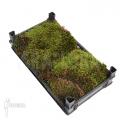 Hypnum moss cradle