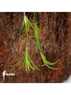 Album Terrarium plants