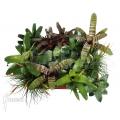 Mix of tropical bromeliads