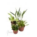 Orchid mini botanical 4 species