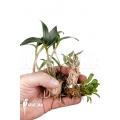 Orchid starter package botanical 3