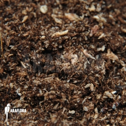 Peat and spaghnum potting mix