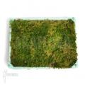 Spaghnum moss Cradle