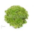Sphagnum moss 10 l