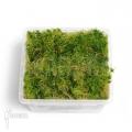 Sphagnum moss starter