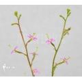 Triggerplant 'Stylidium debile'