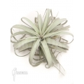 Tillandsia xerographica XL