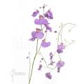 Bladderwort 'Utricularia longifolia'