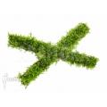Vesicularia dubyana 'Java moss' sticks